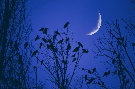 Cantec de iarna (Winter Song)